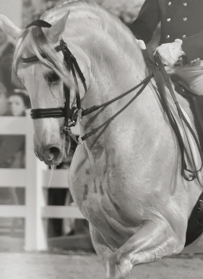 Show Photograph - Dressage Perfection by JAMART Photography