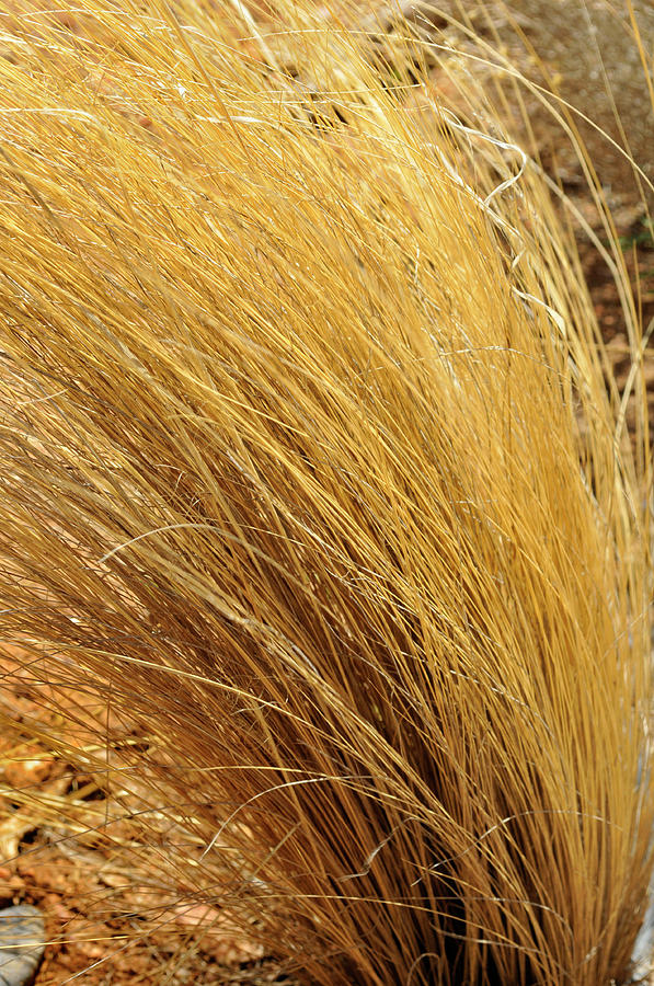 Landscape Photograph - Dried Grass by Ron Cline