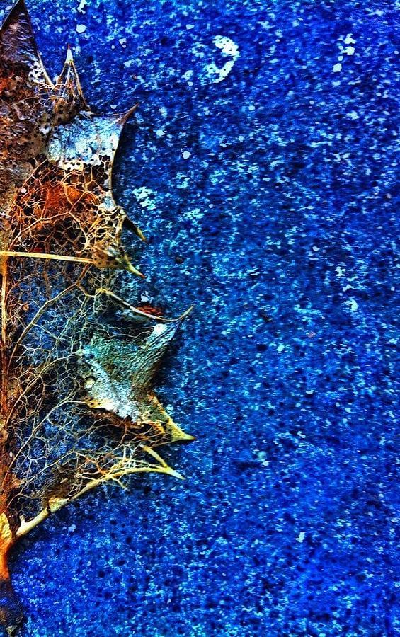 Leaf Photograph - Dried Leaf by Eddie G
