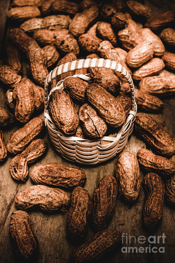 Peanuts Photograph - Dried Whole Peanuts In Their Seedpods by Jorgo Photography - Wall Art Gallery