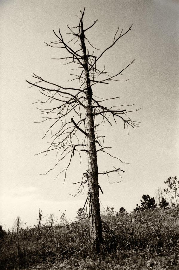 Drift Tree by Amarildo Correa