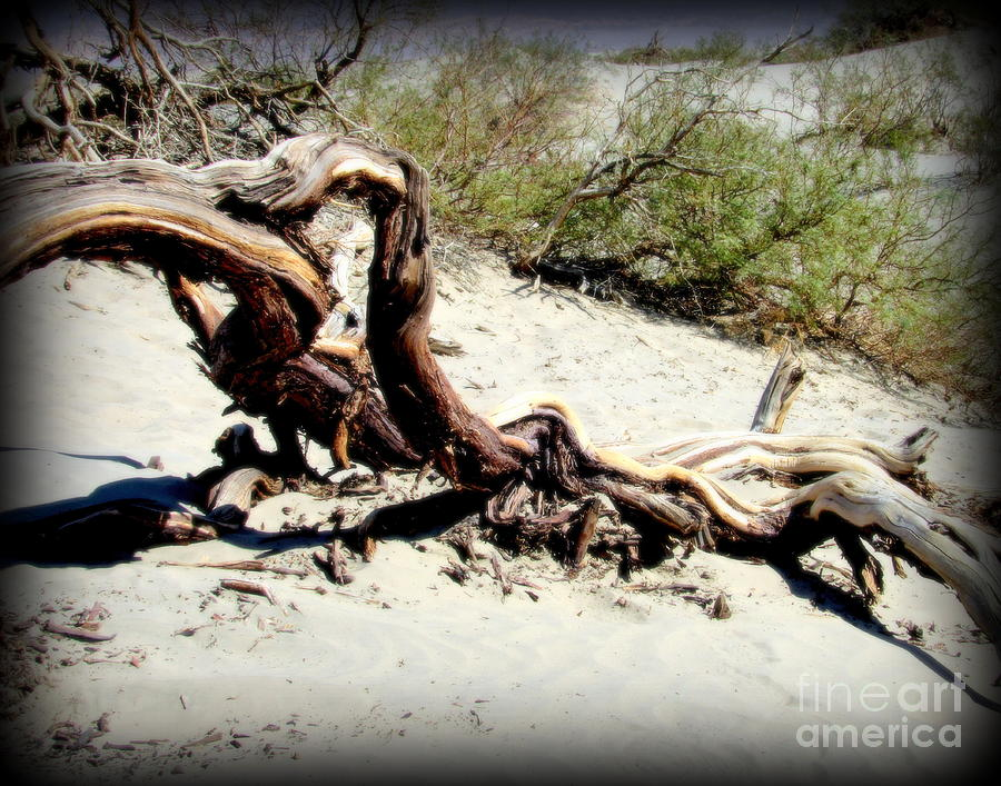 Death Valley Photograph - Drift Wood at Death Valley by Joy Patzner