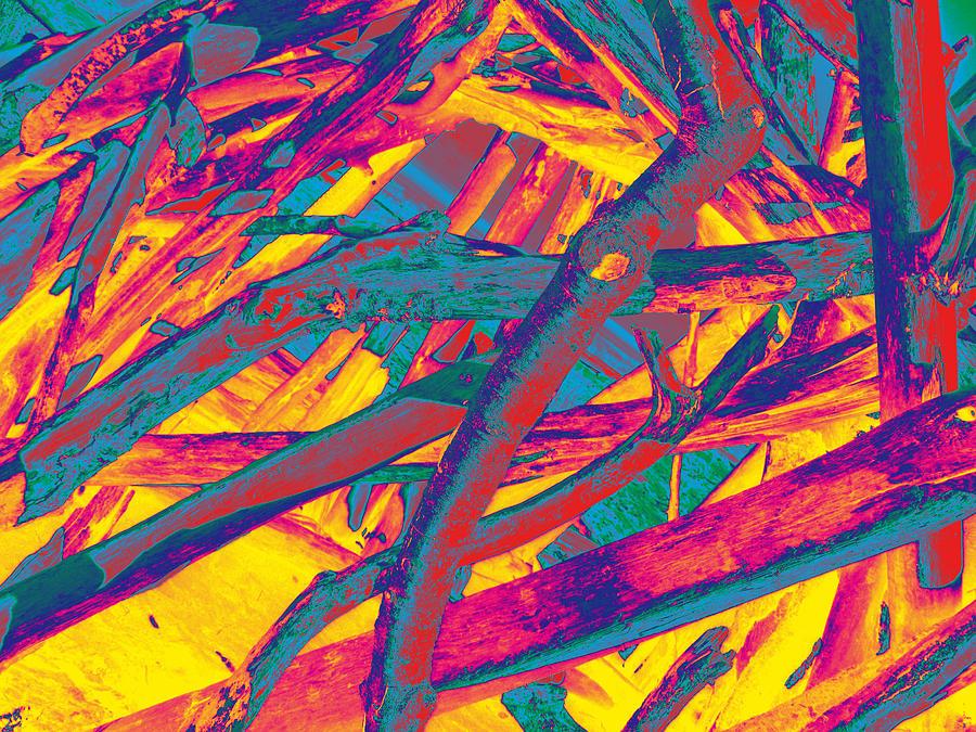driftwood #5 by Anne Westlund