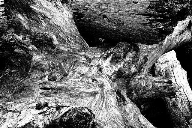Wood Photograph - Driftwood 6 by Daniel Kazor
