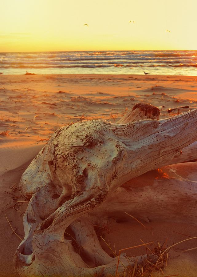 Driftwood at Sunset by Michelle Calkins