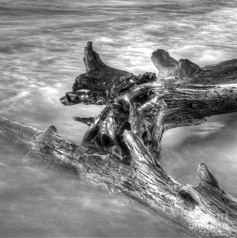 Beach Photograph - Driftwood At Whitefish Point by Twenty Two North Photography