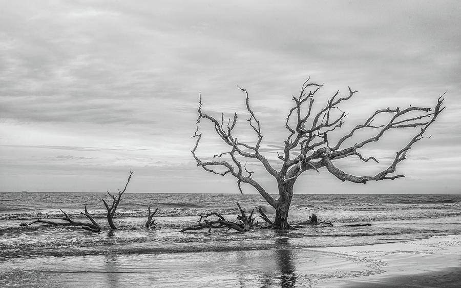 Driftwood Beach Photograph - Still Standing In Black And White by Andrew Wilson