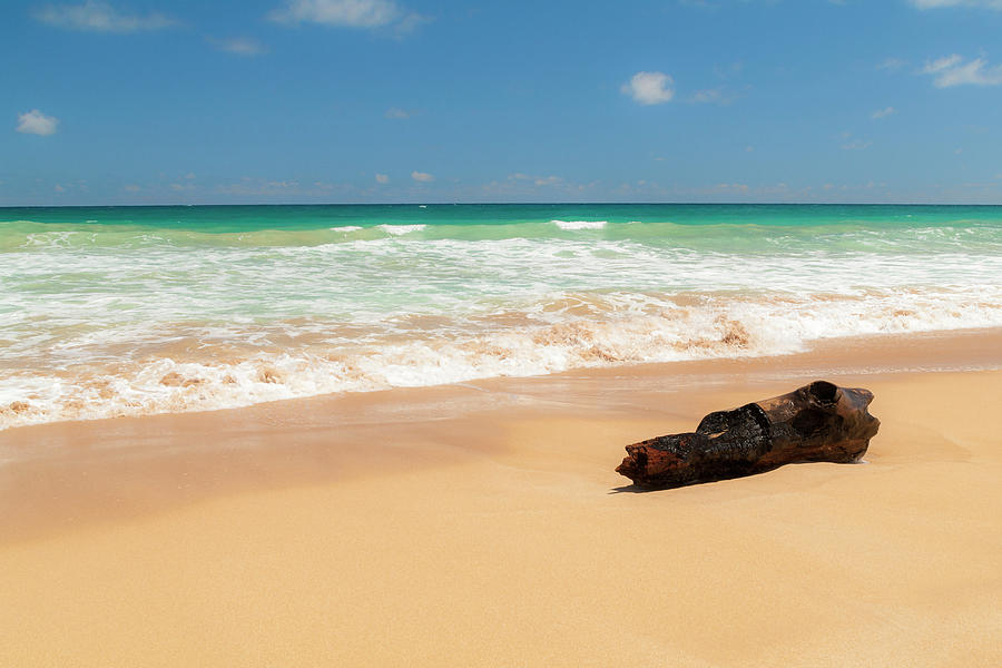 Tropic Photograph - Driftwood by Brian Harig