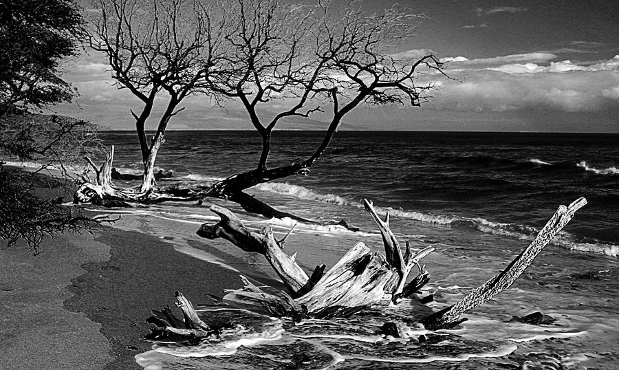 Driftwood Photograph - Driftwood Bw Fine Art Photography Print by James BO  Insogna