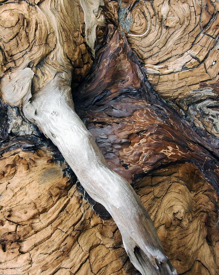 Driftwood Photograph - Driftwood Canyon Vi by D Kadah Tanaka