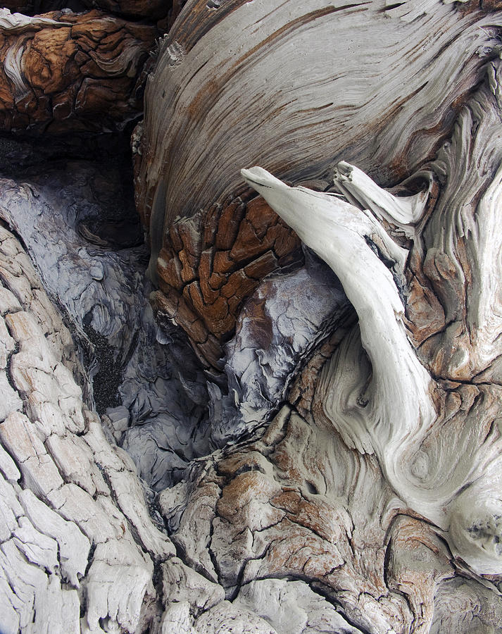 Driftwood Photograph - Driftwood Canyon Vii by D Kadah Tanaka