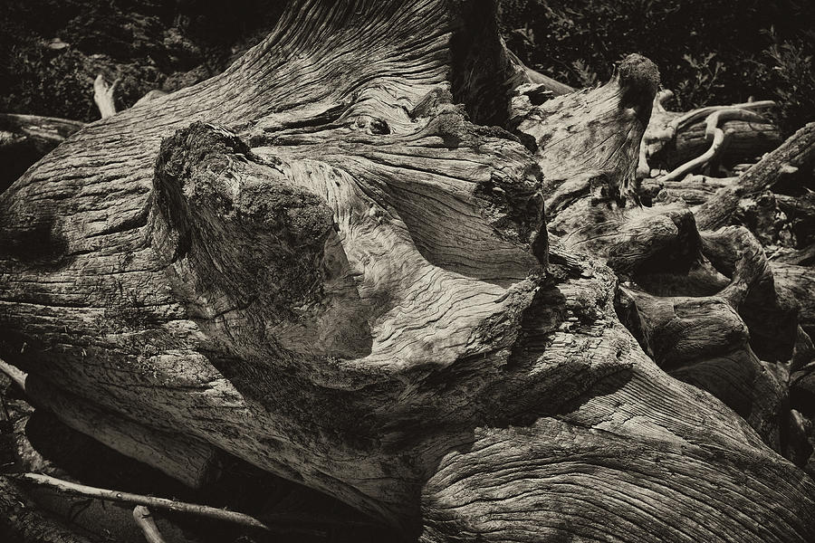 Driftwood Photograph - Driftwood by Hugh Smith