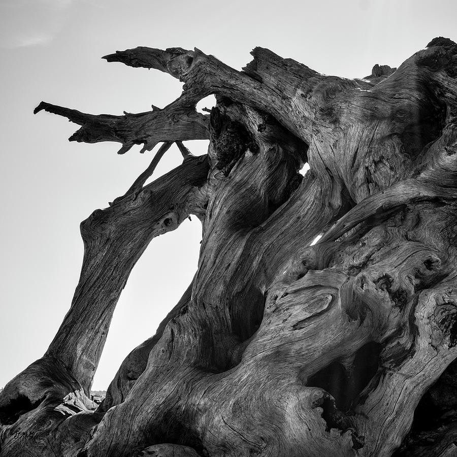 Abstract Photograph - Driftwood I SQ BW by David Gordon