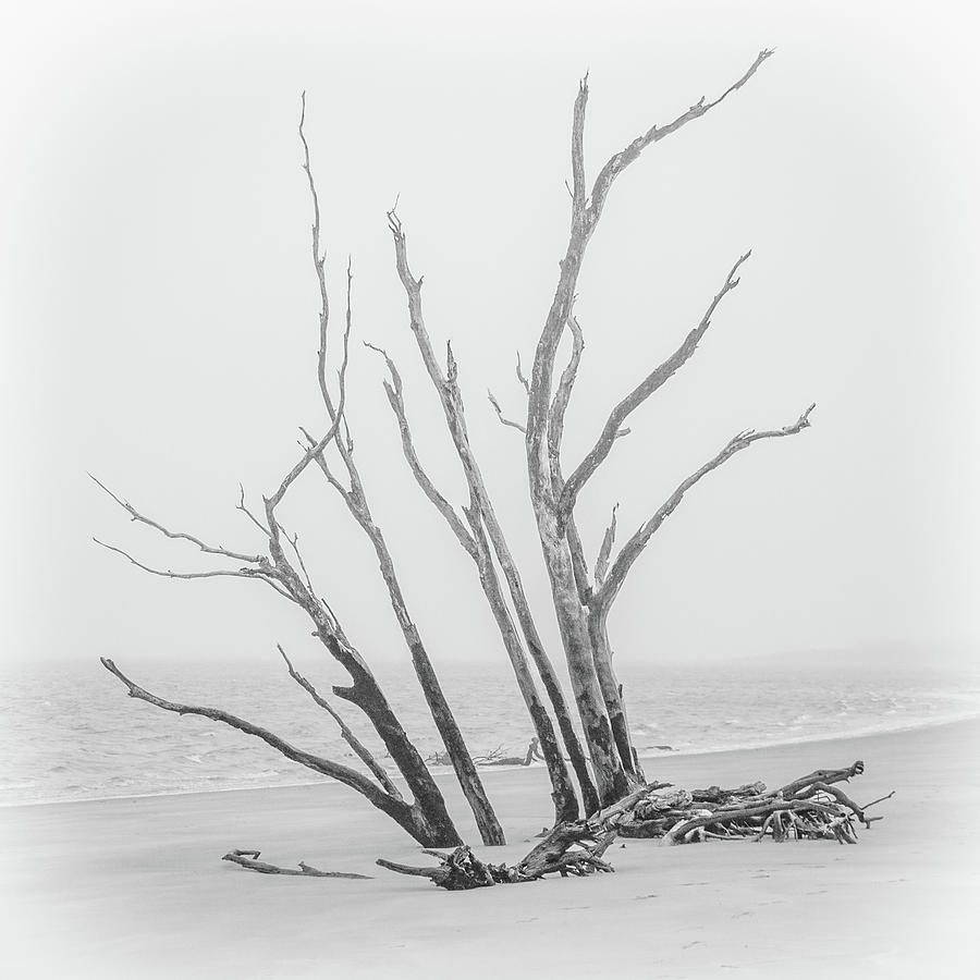 Driftwood Beach Photograph - Driftwood In Black And White by Andrew Wilson