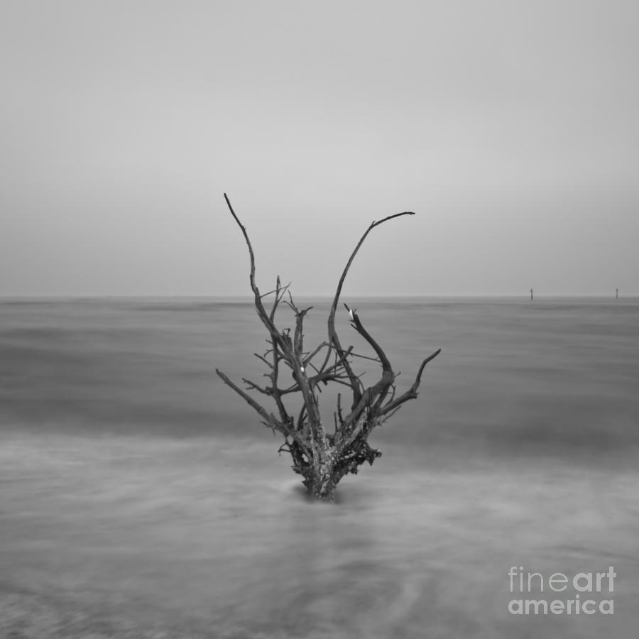 Infrared Photograph - Driftwood Infrared 64 by Rolf Bertram