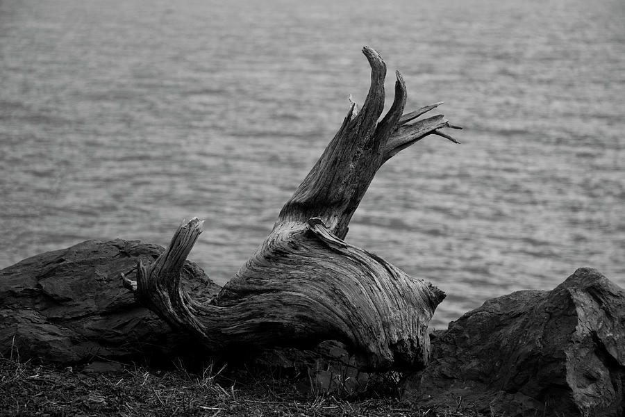 Black And White Photograph - Driftwood by Jeff Severson