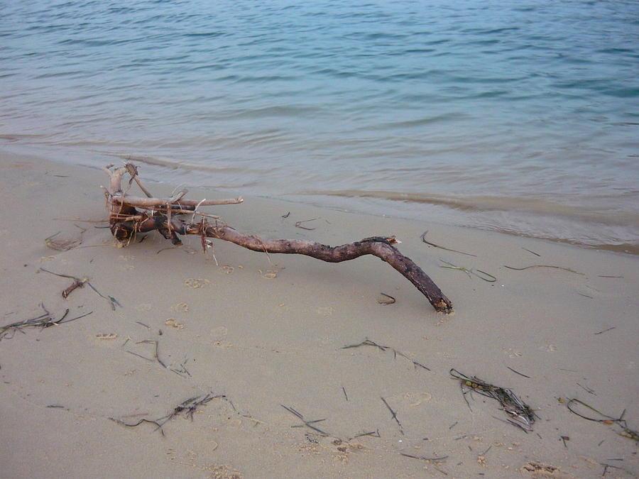 Seascape Landscape Beach Driftwood Ocean Beach Photograph - Driftwood On Ocean Beach by Adrianne Wood