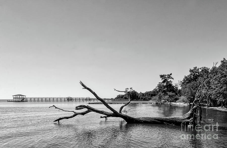 Driftwood Tree In Lake - Bw Photograph