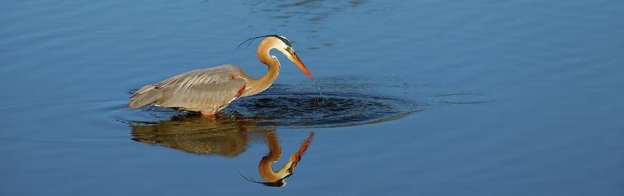 Heron Photograph - Drink by Tony Umana