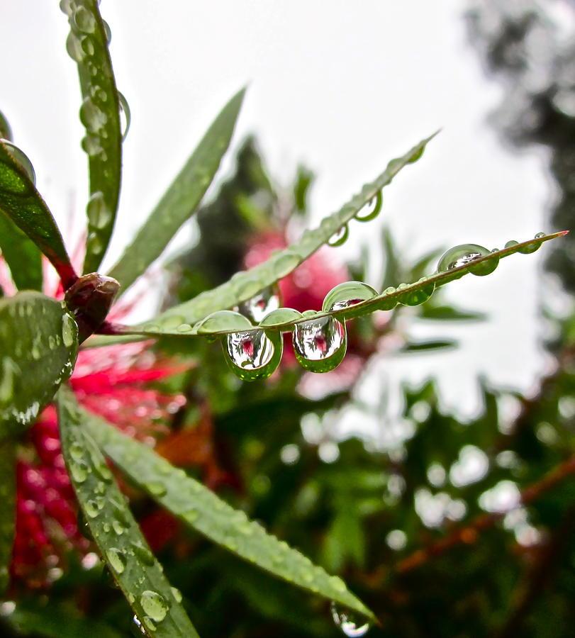 Rain Drop Photograph - Drip And Drop by Gwyn Newcombe