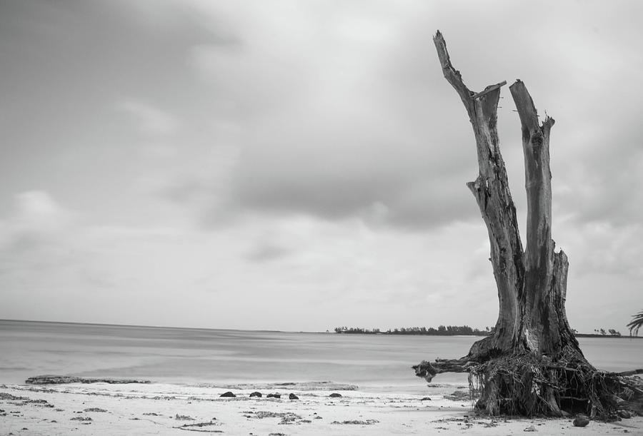 Bahamas Photograph - Dritwood by Tony Nardecchia