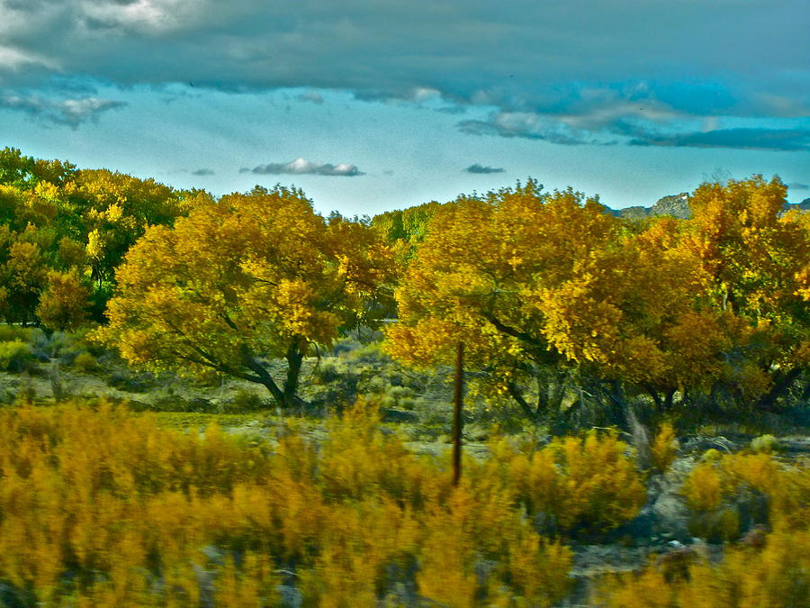 Sky Photograph - Driving Foliage by Gwyn Newcombe