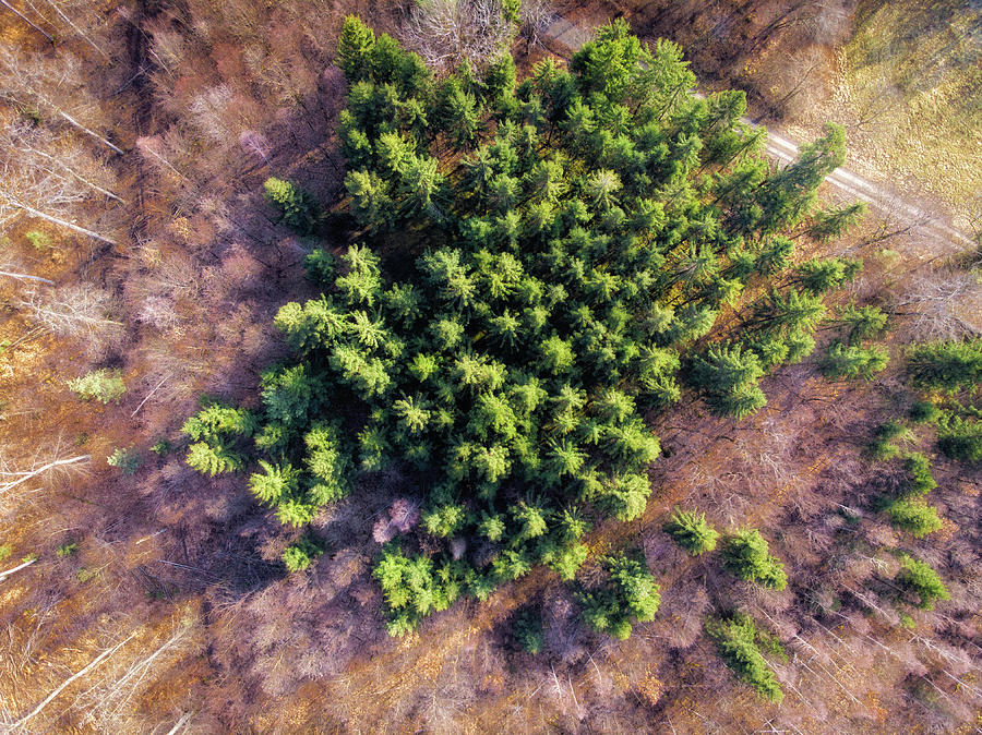 Drone Photography Trees In Forest From Above Photograph By Matthias