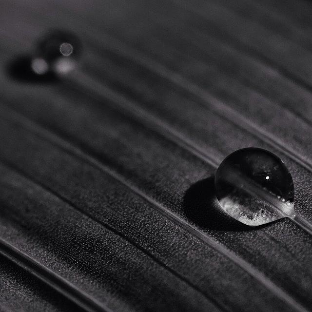 Blackandwhite Photograph - Droplets by Dave Edens