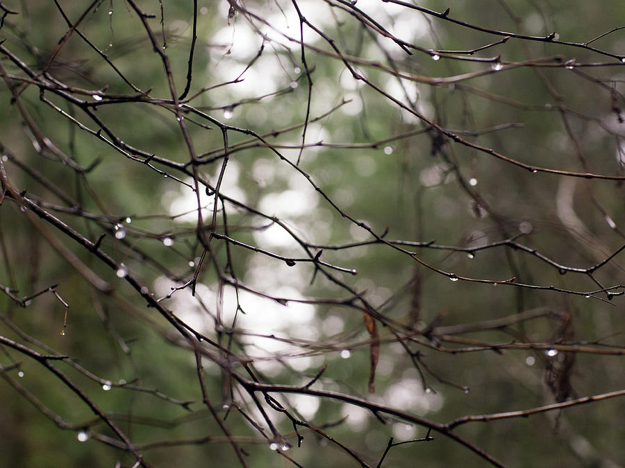 Drops Photograph - Droplets On Branches by Trance Blackman