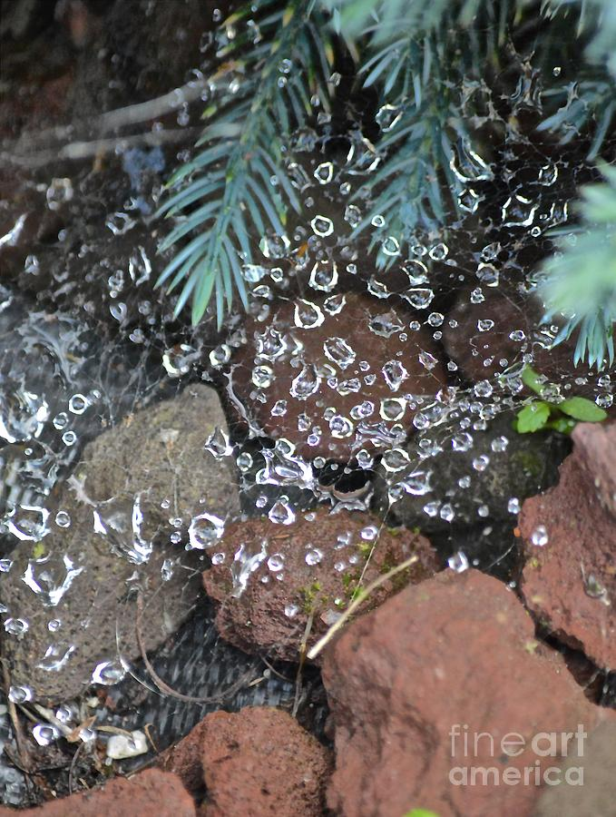 Droplets Photograph - Droplets Over Web by Photos  By Zulma