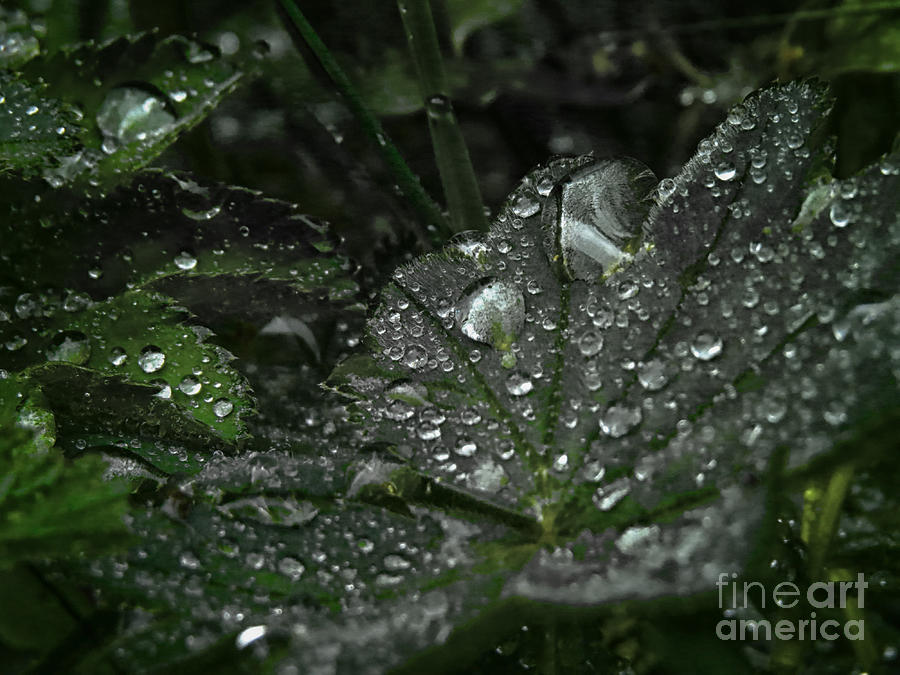 Abstract Photograph - Drops And Leaf by Ulisse Bart