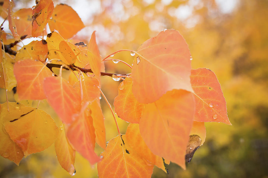 Drops of Autumn by Diane Mintle
