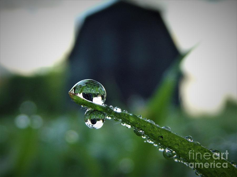Drops Of Dew In The Morning Photograph