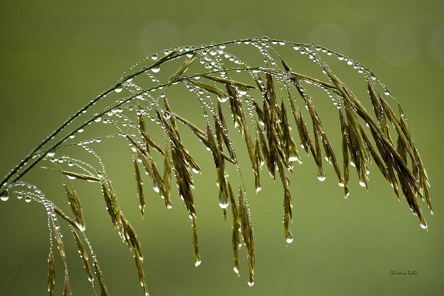 Drops Of Water Photograph - Drops Of Water On Grass by Christina Rollo