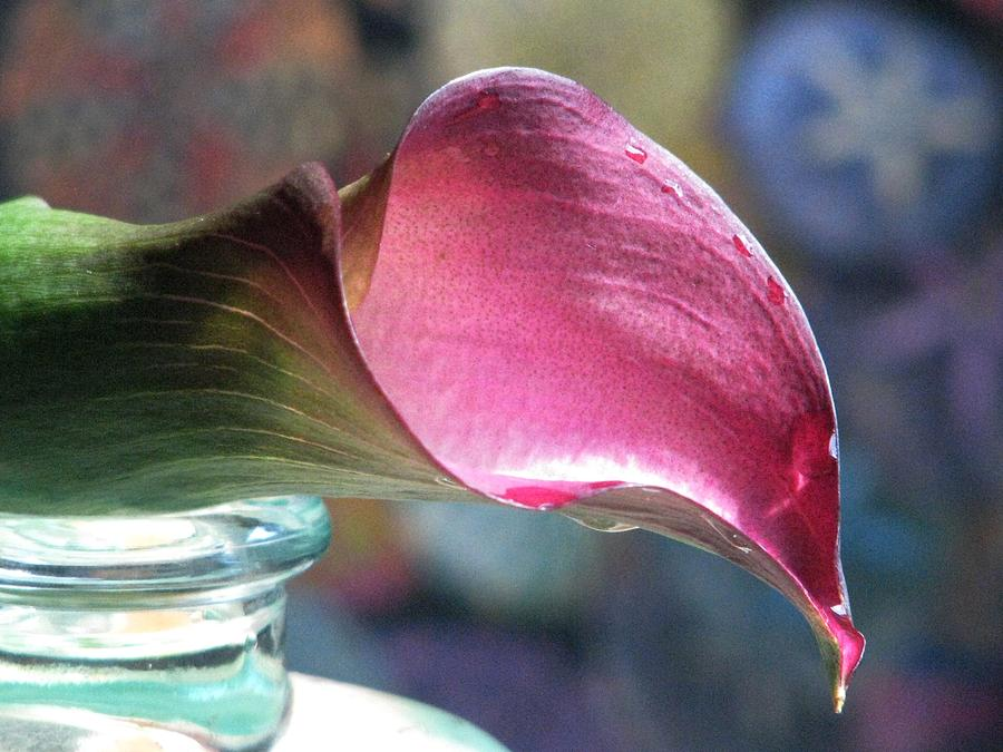 Bottles Photograph - Drowsy Calla Lily by Angela Davies