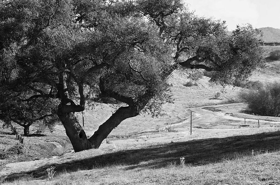Black Photograph - Drum Canyon by Patricia Stalter