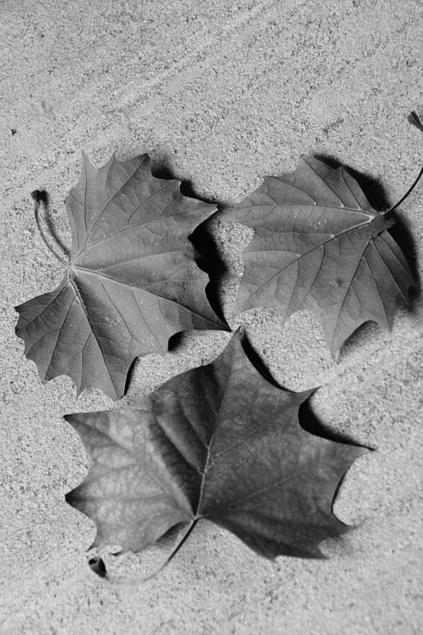 Dryness Photograph - Dry Beauty by Dhara Kacha