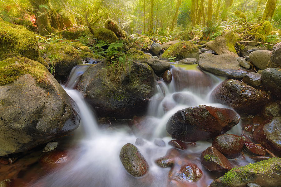 Dry Creek Photograph - Dry Creek II by David Gn