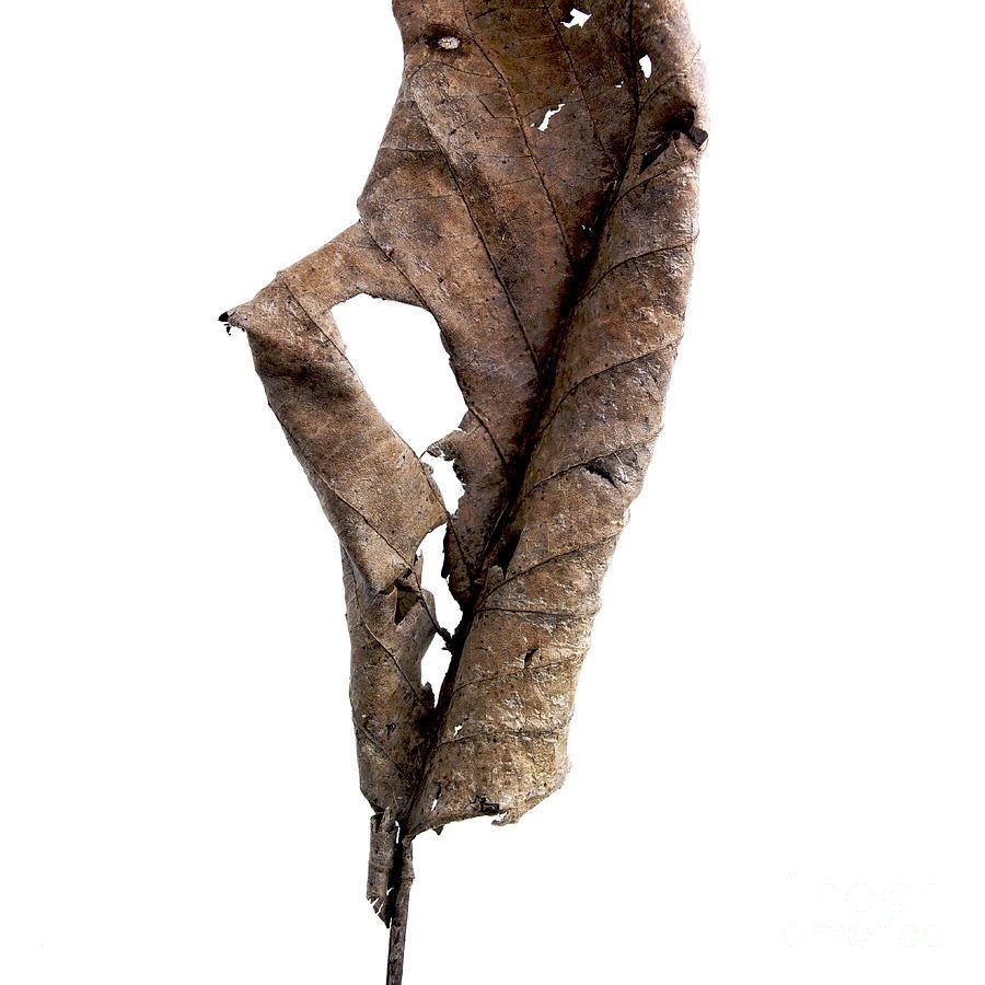 White Background Photograph - Dry Leaf by Bernard Jaubert