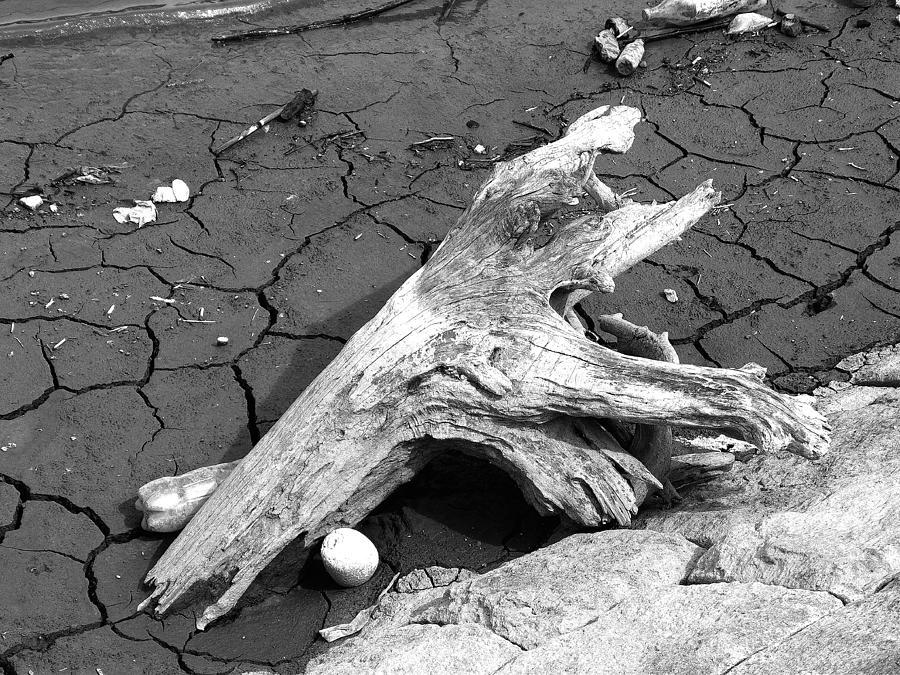 Barren Land Photograph - Dry Wood On Barren Land by Vineta Marinovic