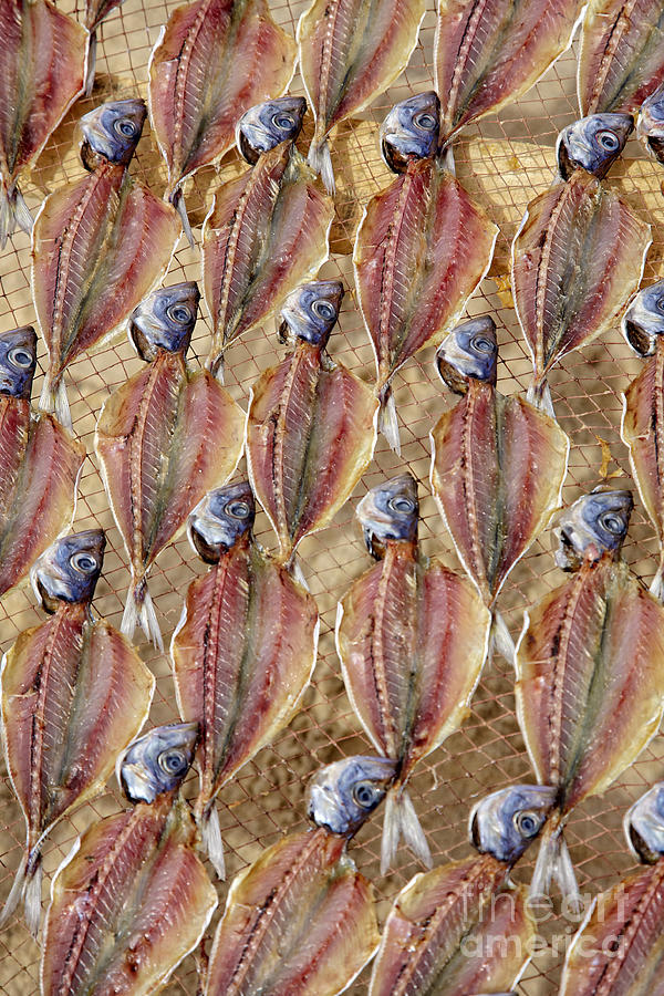 Drying Fish On A Rack Photograph