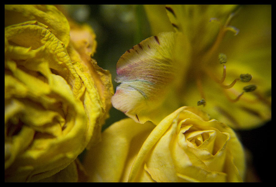 Flowers Photograph - Drying Group - 310020 by TNT Images