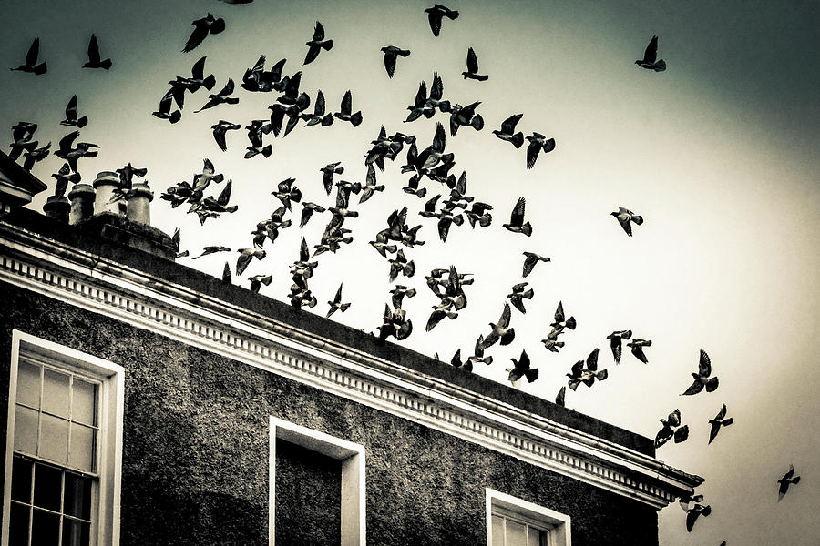 Flight over Oscar Wilde's hood, Dublin by Jennifer Wright