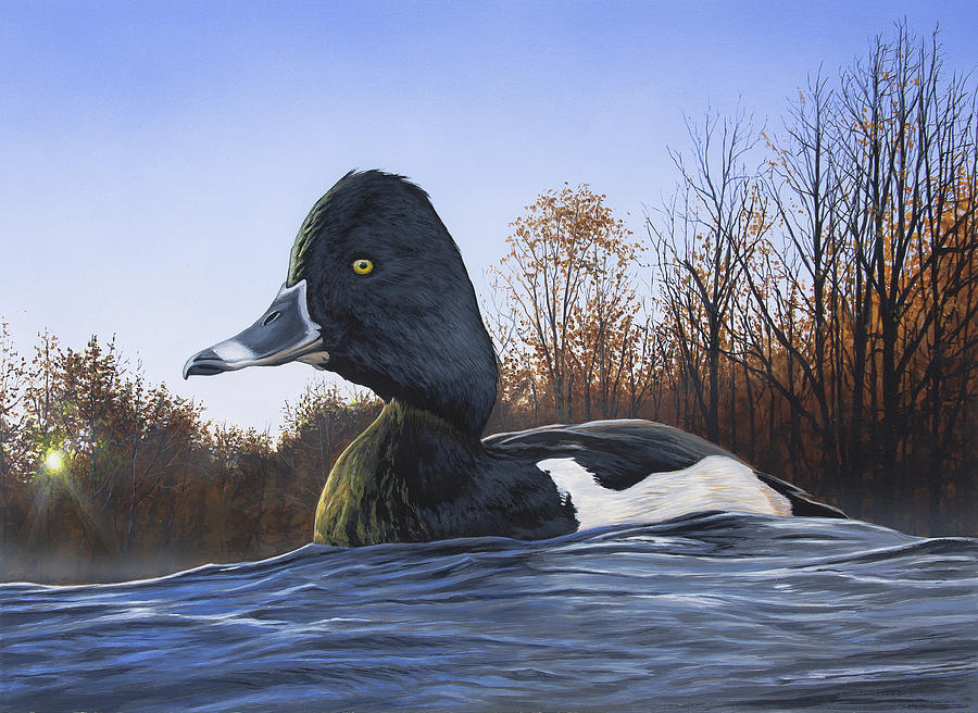 Duck Painting - Ring-necked Duck by Anthony J Padgett