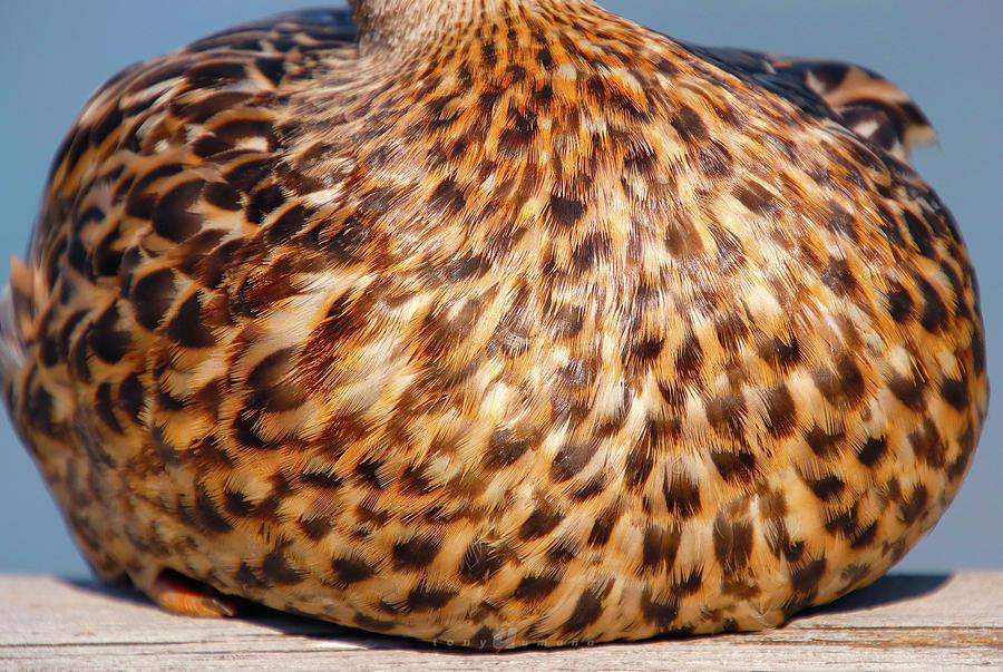 Duck Breast Photograph by Tony Umana