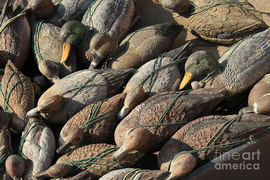 Ducks Photograph - Duck Decoys On Burano by Michael Henderson