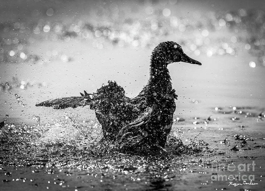 Duck Dynasty by Roger Carlsen