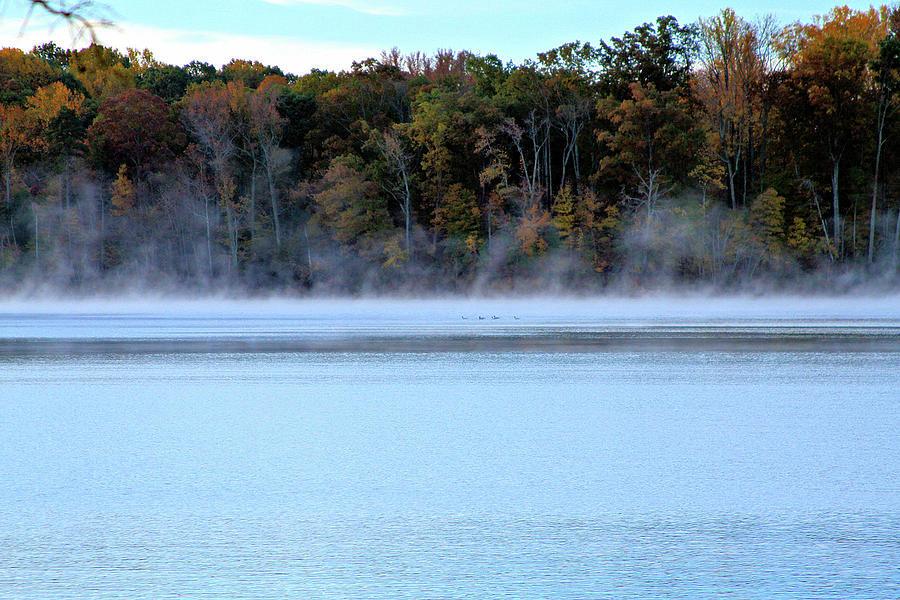 Ducks in the Fog by John Lewis
