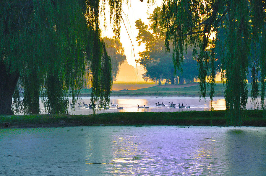 Ducks Photograph - Duck Pond At Dawn by Bill Cannon