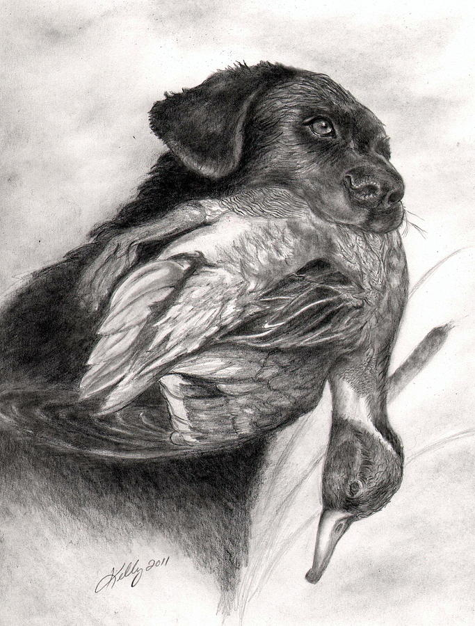 Dogs Drawing - Duck Season by Kathleen Kelly Thompson